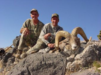 Desert and California Bighorn Sheep Hunting